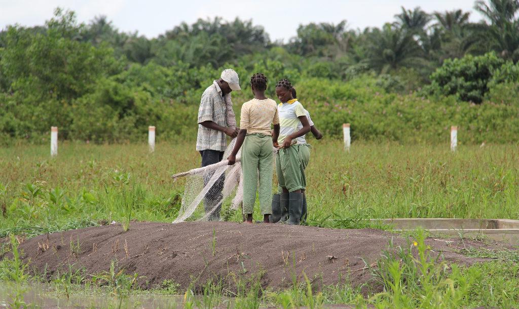 Le gouvernement recherche un cabinet de RH pour le recrutement du personnel du projet e-Agriculture   Photo : salesianedonboscobenin.org