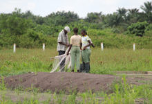Le gouvernement recherche un cabinet de RH pour le recrutement du personnel du projet e-Agriculture | Photo : salesianedonboscobenin.org